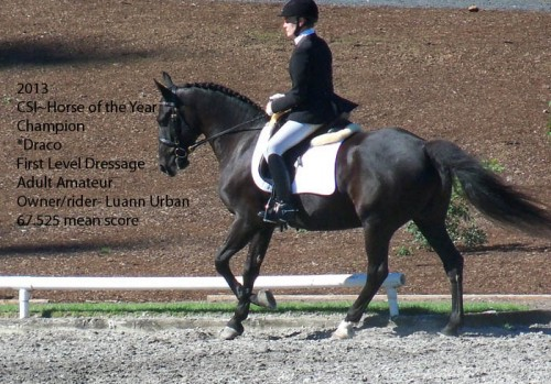 CSI  2013 Horse of the Year_First Level dressage