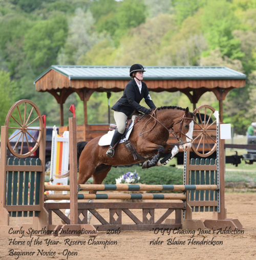 blaine-h-and-oyy-chasing-janes-addiction-2016-csi-horse-of-the-year-reserve-champion