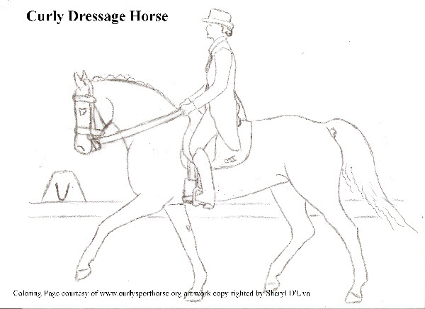 The CSI 2017 Coloring Contest  Curly Sporthorse International